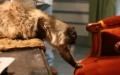 Блог Кота Сашка Лірника. Про те, як збуваються котячі мрії
