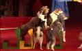 За що ставлять пам'ятники собакам?